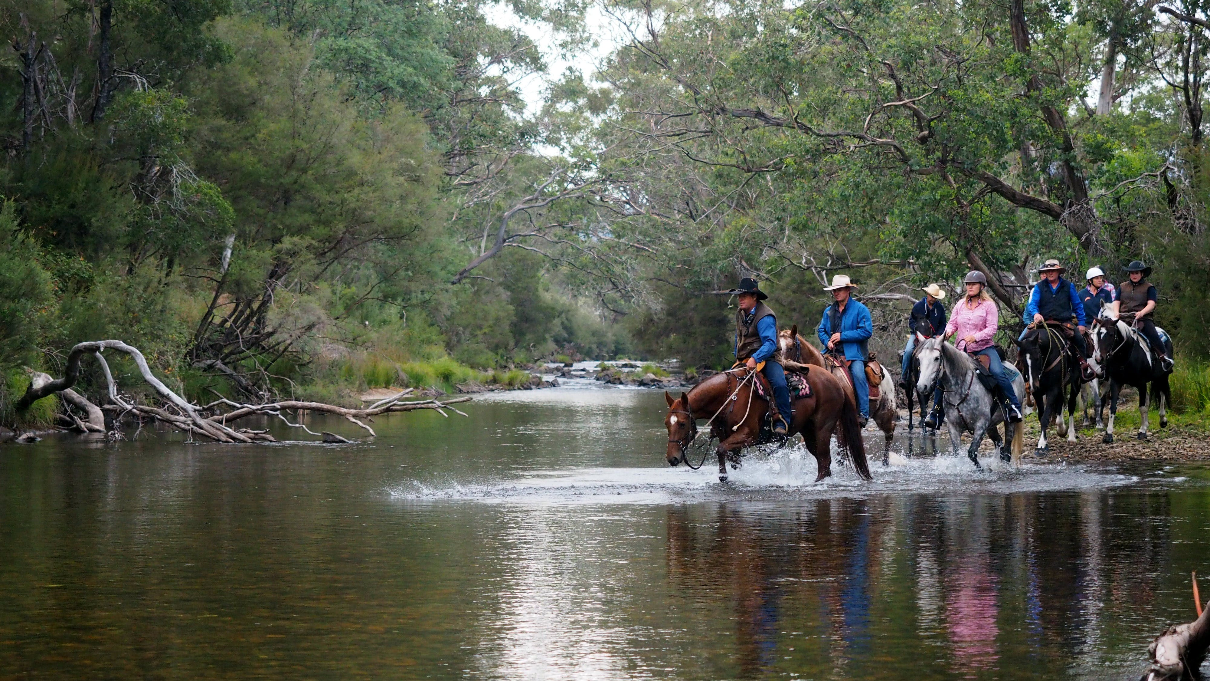 The Man From Snowy River Bush Festival - Accommodation Whitsundays