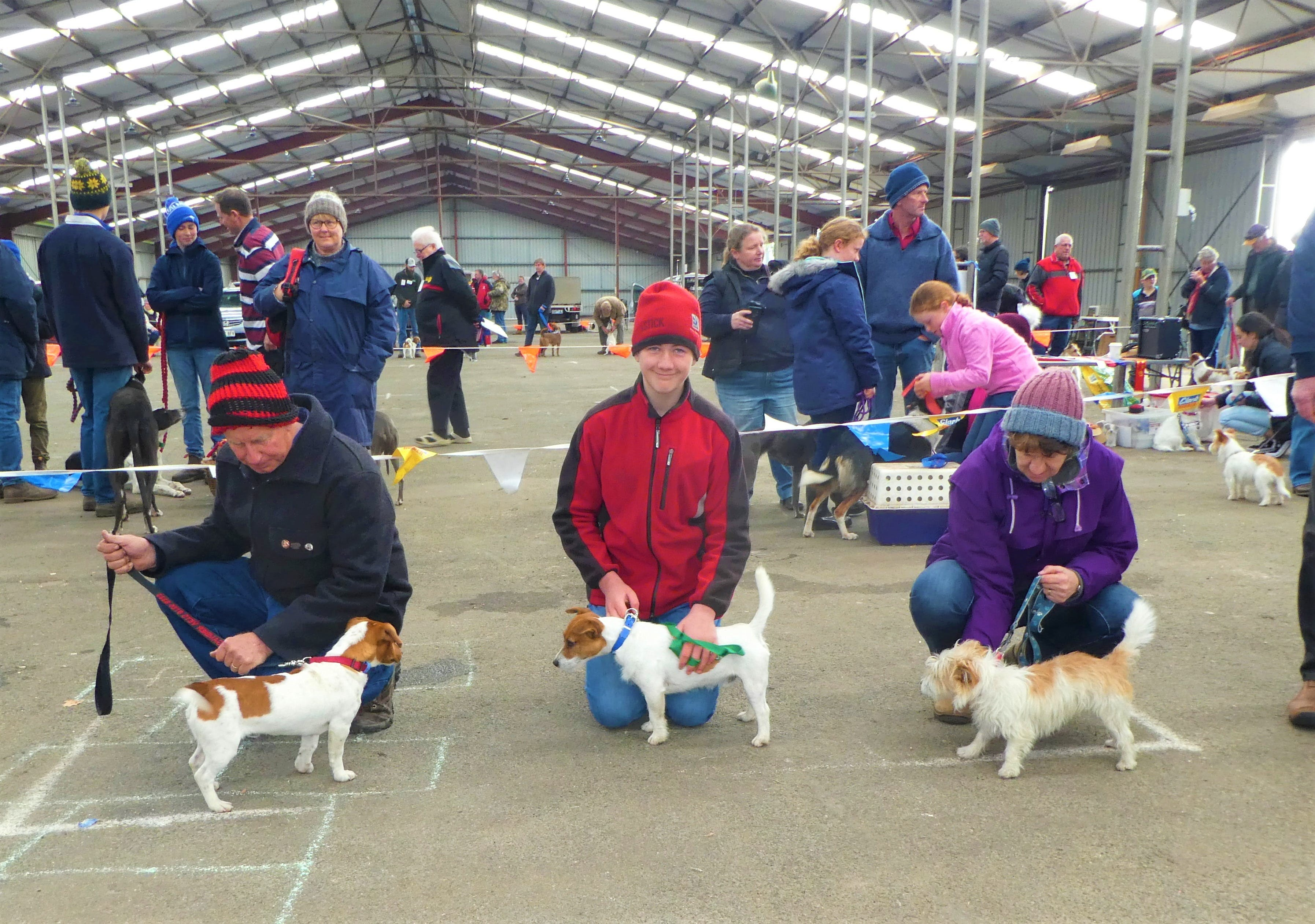 Hamilton Jack Russell Terrier and Hunting Dog Show - Accommodation Whitsundays