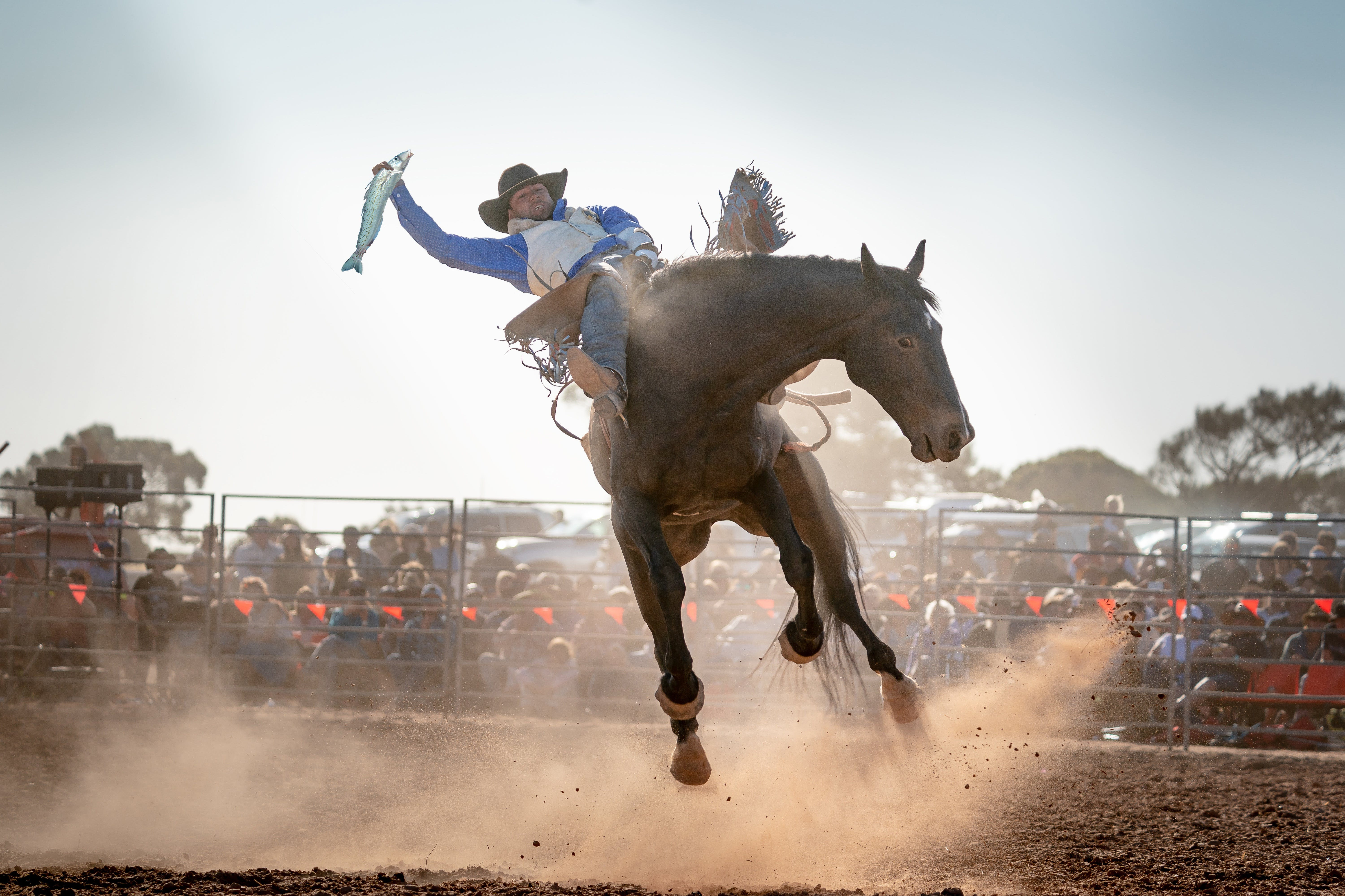 Rodeo by the Sea - Streaky Bay - Accommodation Whitsundays